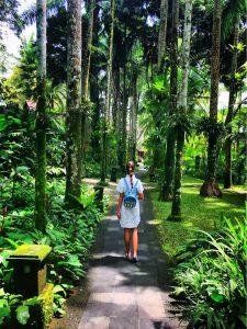 Bali-rain-forest