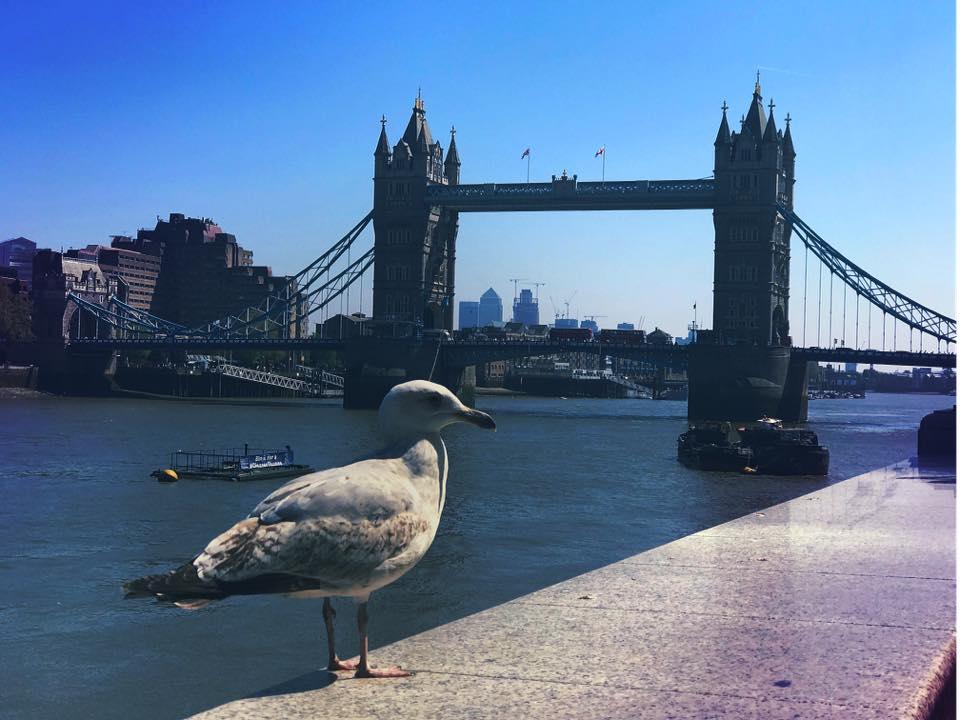 Renata-Cheptene-London-business-trip-8